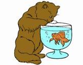 Gato mirando al pez