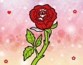 Rosa silvestre