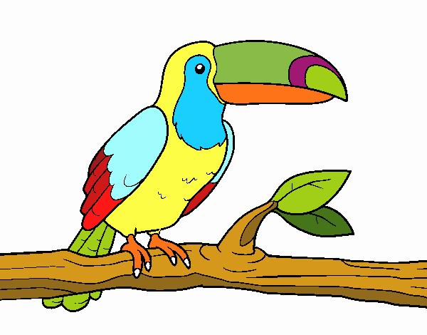 Dibujo De Un Tucán Pintado Por En Dibujos.net El Día 20