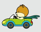 Gato conduciendo