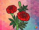 Dibujo Flor de las maravillas pintado por AbrilLOLXD