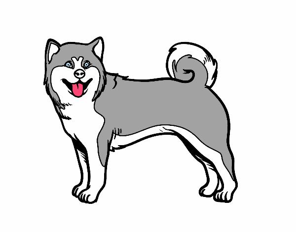 Dibujo Perro Akita Inu pintado por albabm24