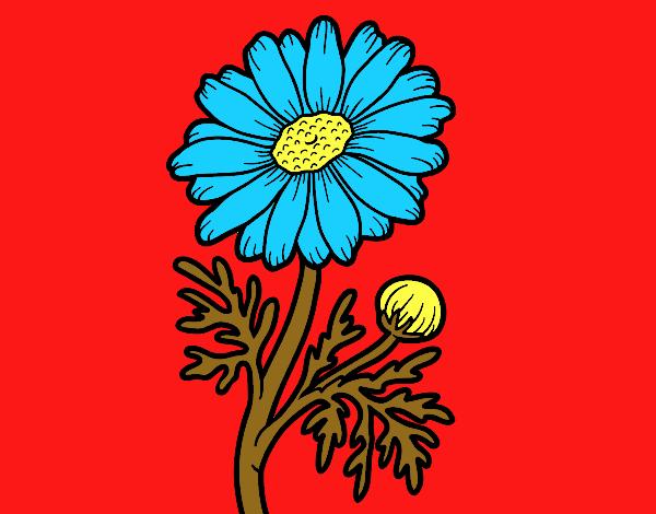 Margarita silvestre