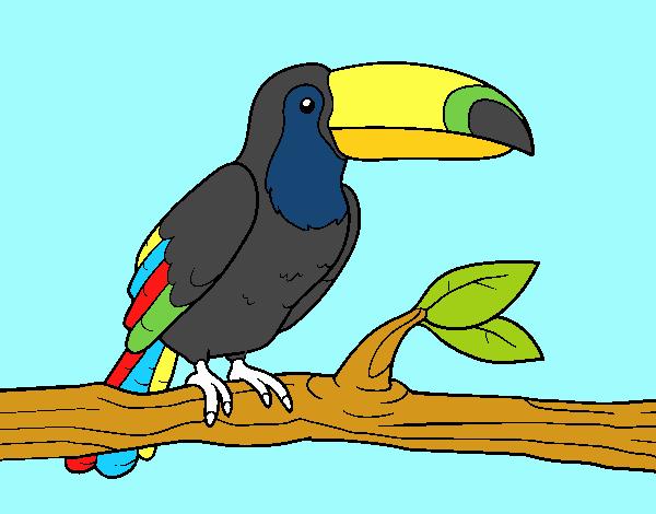Un tucán