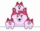 Dibujo Familia Husky pintado por SaritoYu