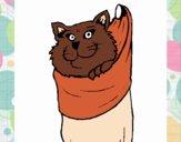 Gato dentro de una calcetín