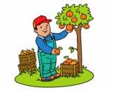 Un agricultor