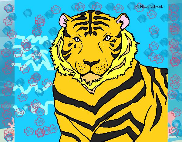 Pagina Para Colorear De Zoo: Dibujos Para Colorear De Animales Del Zoologico