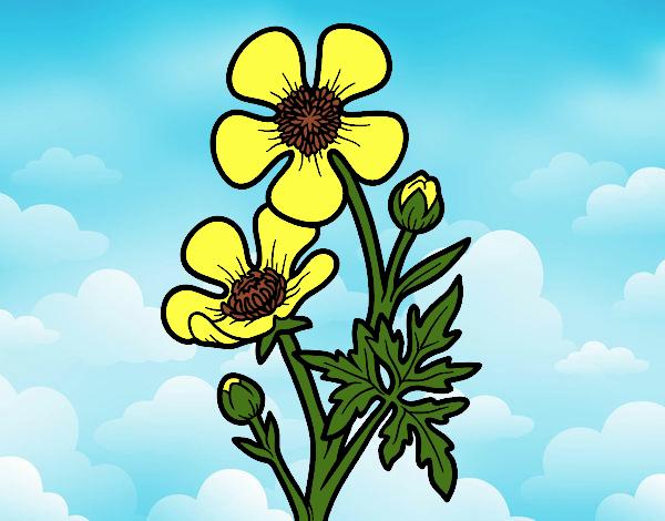 Dibujo Flor botón de oro pintado por Juice