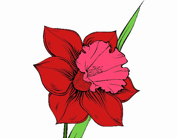 Dibujo Flor de narciso pintado por Juice