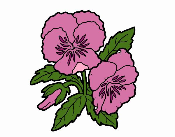 Dibujo Flores de pensamiento pintado por Juice