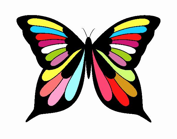 Mariposa 19