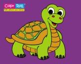 Tortuga Color Roll