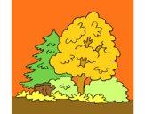 Dibujo Bosque pintado por juanbr
