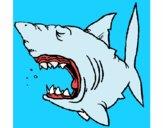 Tiburón 1