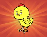 Un pollito pio