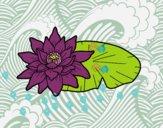 Una flor de loto