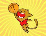 Gato jugando a baloncesto