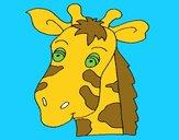 Cara de jirafa