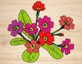 Dibujo Primula pintado por mendz
