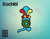 Los días aztecas: la flor Xochitl