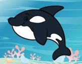 Dibujo Orca joven pintado por Moi777