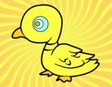 Pato de río