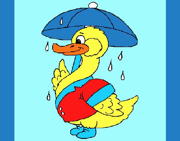 Pato bajo la lluvia
