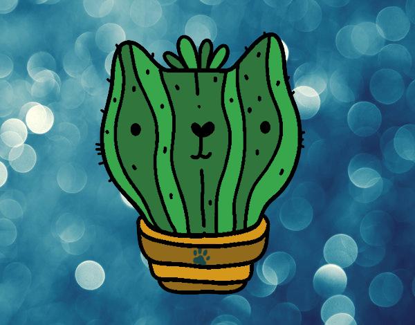 cactus de gato
