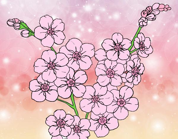 Dibujo Flor de cerezo pintado por gatitaYT