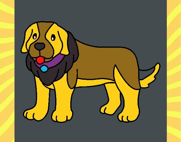 Perro pigmento
