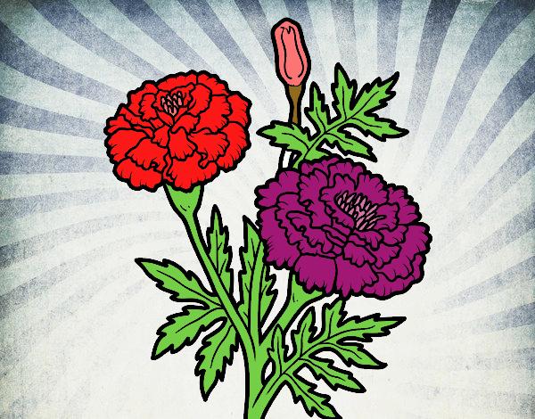 Flor maravilla