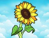 Dibujo Flor de girasol pintado por jenni2711