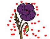 Una flor de amapola