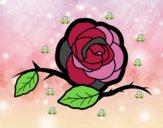 Una preciosa rosa