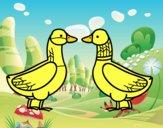 Pato hembra y pato macho