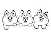 Dibujo de 3 perritos