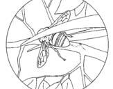 Dibujo de Abejorro 1