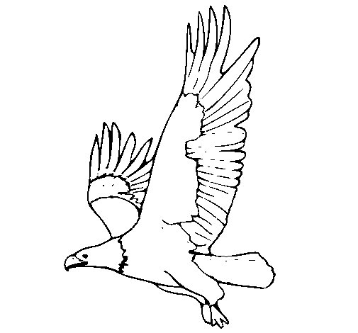 Dibujo de Águila volando para Colorear