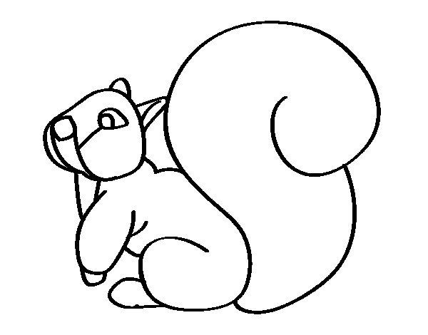 Dibujo de Ardilla con una gran cola para Colorear