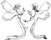 Dibujo de Aves con largas colas para colorear