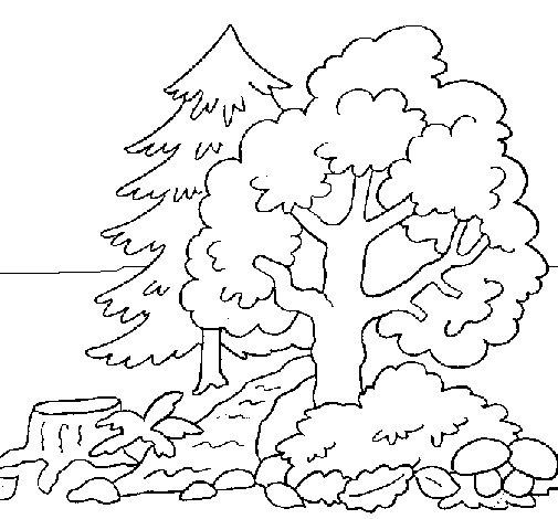 Dibujo de Bosque 1 para Colorear