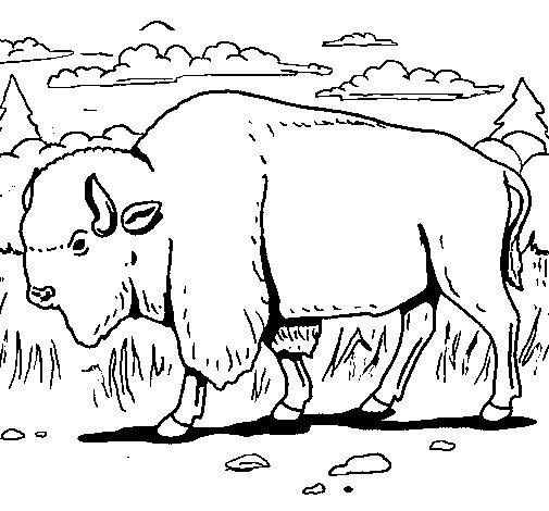 Dibujo de Búfalo  para Colorear
