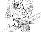 Dibujo de Búho real americano para colorear