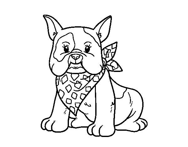 Dibujo de Bulldog francés para Colorear