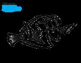 Dibujo de Buscando a Nemo - Dory para colorear