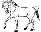 Dibujo de Caballo con la pata levantada para colorear