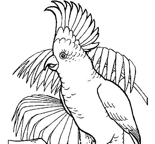 Dibujo de Cacatúa para Colorear