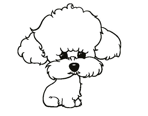 http://cdn5.dibujos.net/dibujos/pintar/cachorro-de-poodle_2.png