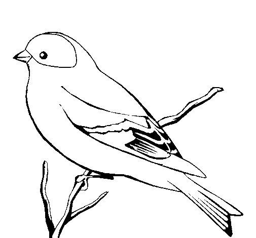 Dibujo de Canario salvaje para Colorear